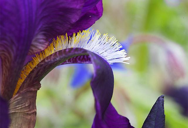 Post Iris curve