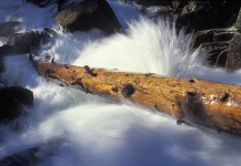 Spring Water Dance