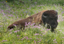 Buff In The Flowers