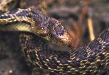 Friendly Snake ?