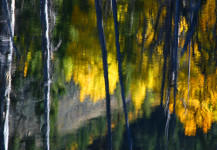 Painterly Reflection